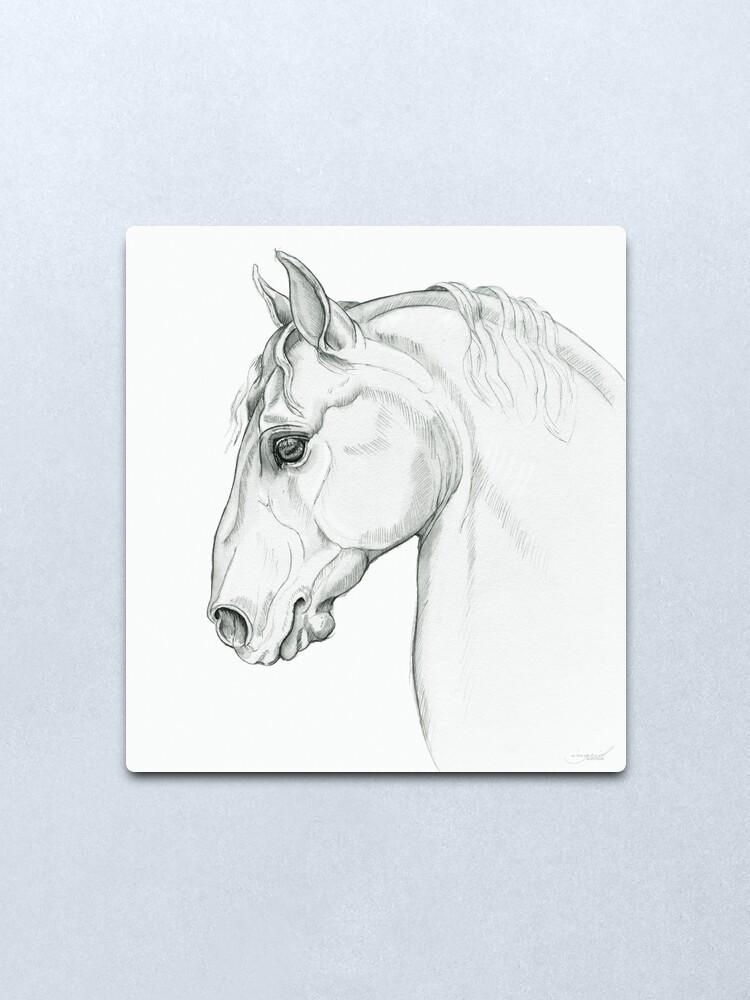 Alternate view of Baroque — Lippizaner Horse Head Study Metal Print