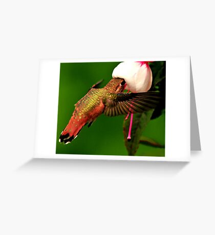 HUMMINGBIRD FEEDER Greeting Card