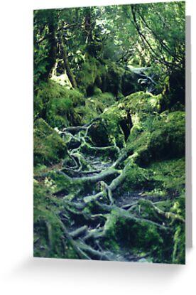 Rainforest Roots by Michael John