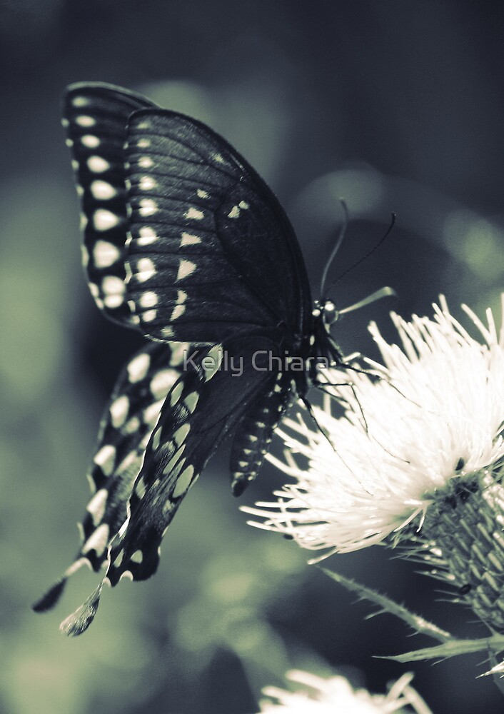 White Hearts on Black Velvet  by Kelly Chiara