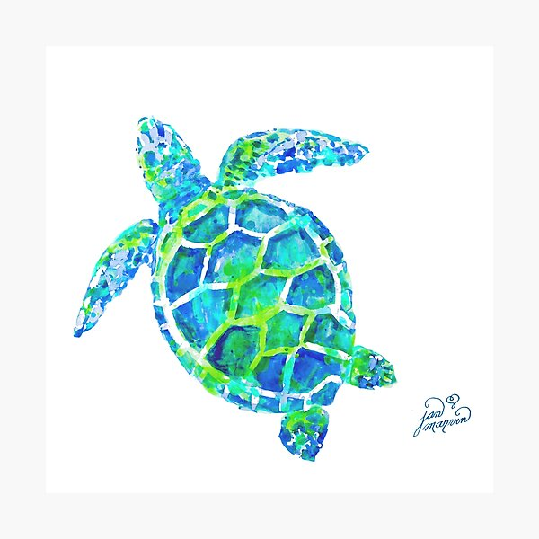 Sea Turtle no splots by Jan Marvin Photographic Print