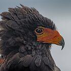 Bateleur Eagle by JMChown