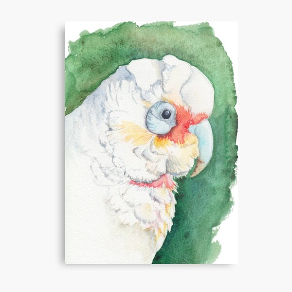 Long Billed Corella (Cockatoo) watercolour painting of Australian bird Metal Print