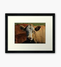 Cow on the Prairies Framed Print