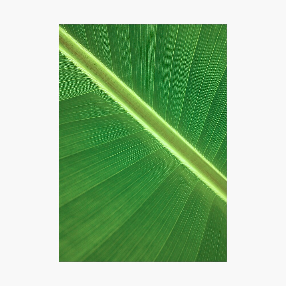 Palm Leaf Wall Art Tropical Leaf Prints Printable Leaf Green Leaf Print Tropical Leaves Art Palm Leaf Print Palm Prints Poster Print Poster By Alex Artprints Redbubble Here presented 62+ tropical leaf drawing images for free to download, print or share. palm leaf wall art tropical leaf prints printable leaf green leaf print tropical leaves art palm leaf print palm prints poster print poster by alex artprints redbubble
