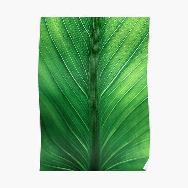 Palm Leaf Wall Art, Tropical Leaf Prints, Printable Leaf, Green Leaf Print, Tropical Leaves Art, Palm Leaf Print, Palm Prints, Poster Print Poster
