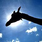 Giraffe 01 by Vincent Bayliss