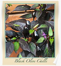 Black Olive Chilli - Chilli Collection #2 Poster