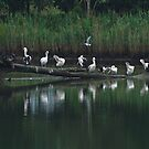The Pelican Perch by Odille Esmonde-Morgan
