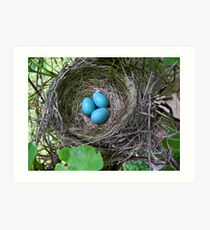 Bird's Nest with Eggs Art Print