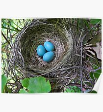 Bird's Nest with Eggs Poster
