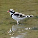 Black-Fronted Dotterel by Rick Playle