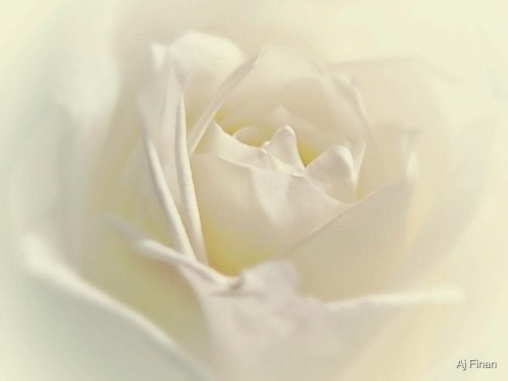 Soft White Rose by Aj Finan