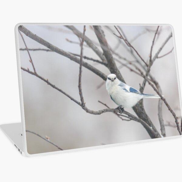 Azure tit, white prince Laptop Skin