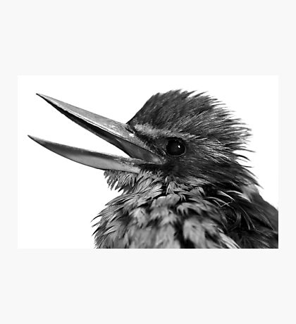 The Kingfisher Photographic Print