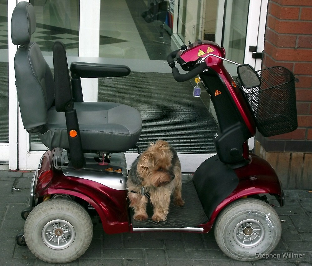 Where has my Driver gone Now !!! by Stephen Willmer