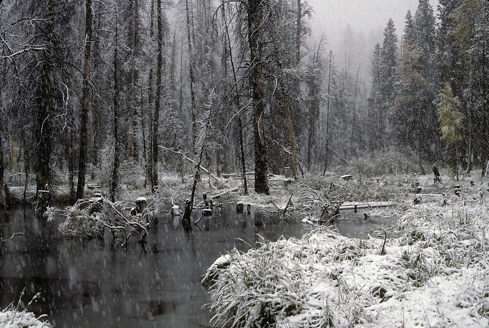 First Snow on Green Creek by BodieBailey