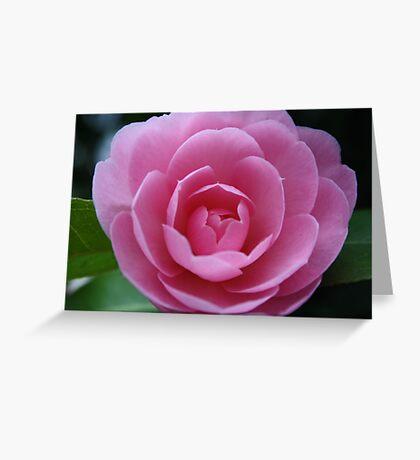 Softh Pink Rose Greeting Card