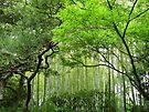 Japan 松、竹、もみじ by Kyoko Beaumont