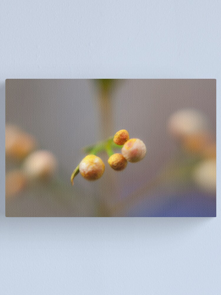Alternate view of Budding Orbs Canvas Print