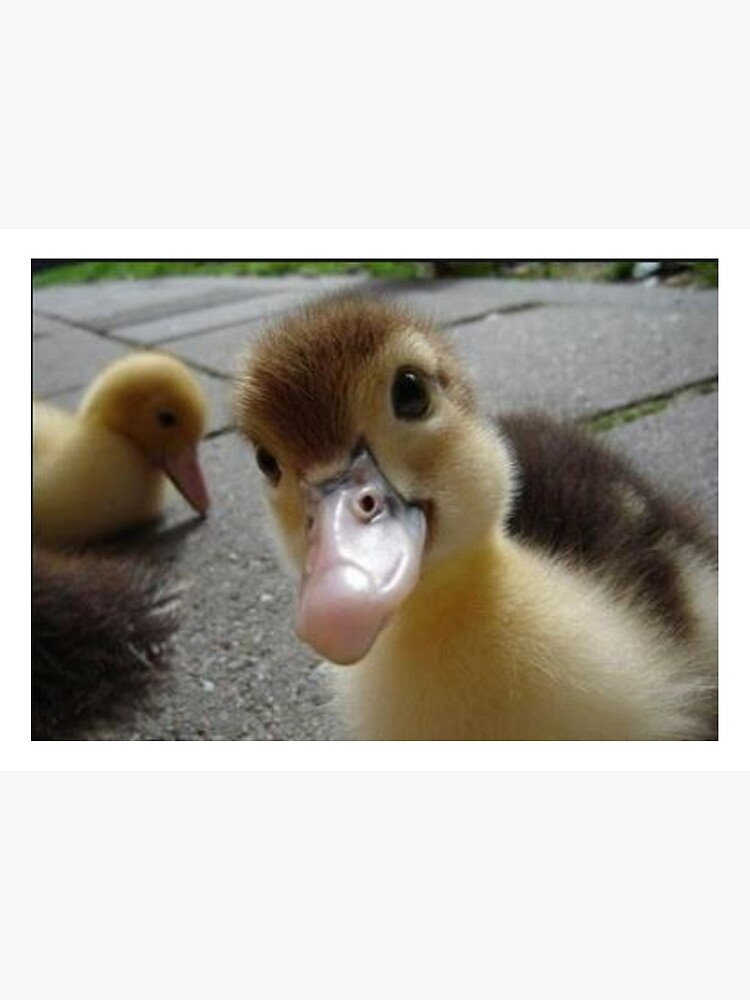 Cute Duck Art Board Print By Malek1307 Redbubble