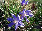 Purple Wildflowers by FrankieCat