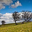 """Tree"" trees! by Shaun Whiteman"