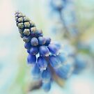 Fairy bells announcing springtime by dhmig
