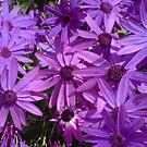 Purple Haze by Hucksty