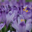 Wonderful  Spring Greetings from Poland .  My Dear Friends ! ! !   by Brown Sugar . F* . Views (632) . Favs (4) . Dziękuję !!! by © Andrzej Goszcz,M.D. Ph.D