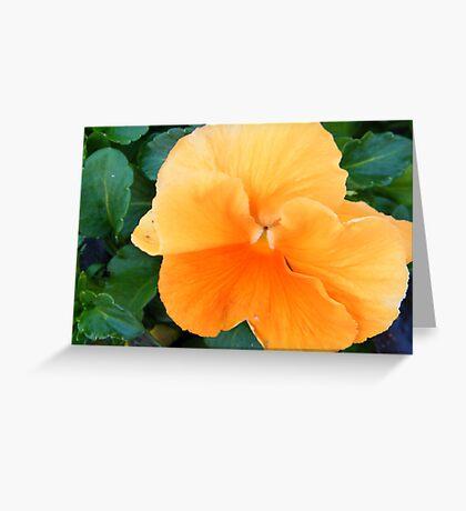Orange Pansy Greeting Card