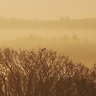 Early Bird by relayer51