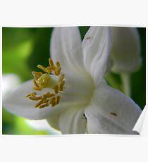 Velvet Spring Poster