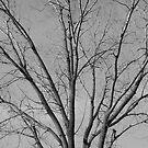 Wisconsin Tree by Christopher Clark
