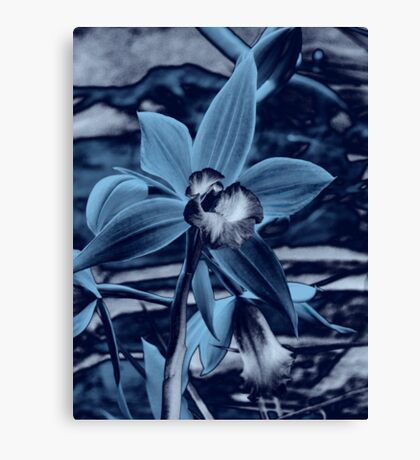 Orchid Collection - 5  Canvas Print