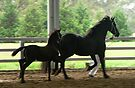 Friesian Workout by louisegreen