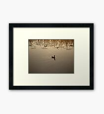 COOT IN BRONZE LIGHT Framed Print