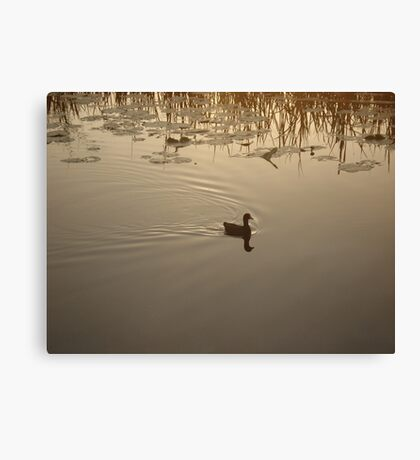 COOT IN BRONZE LIGHT Canvas Print