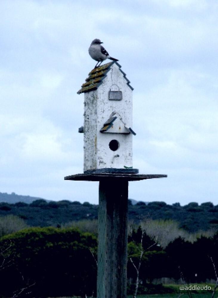 """""""MOCKING BIRD ON MOCK HOUSE"""" by waddleudo"""