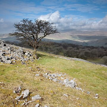 Across Wharfe To Ingleborough by SteveMG