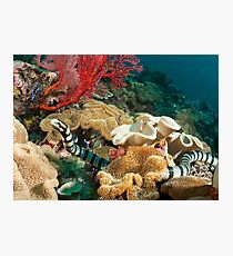 Banded Sea Krait off Port Moresby, Papua New Guinea Photographic Print
