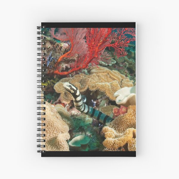 Banded Sea Krait off Port Moresby, Papua New Guinea Spiral Notebook