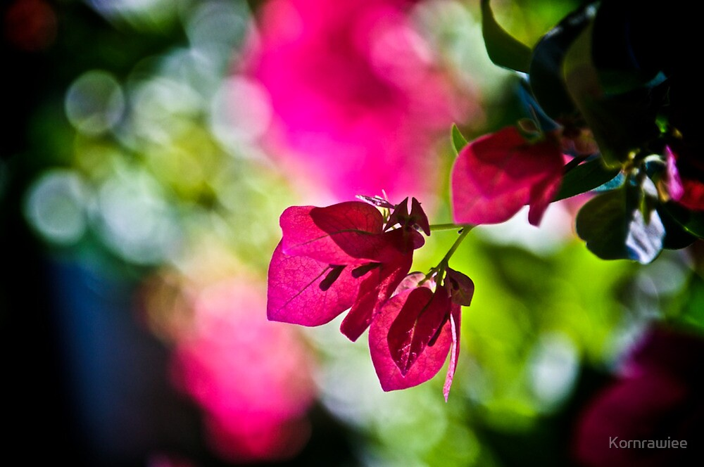 When my dream is Bokeh...:On Featured: The-power-of-simplicity Group by Kornrawiee