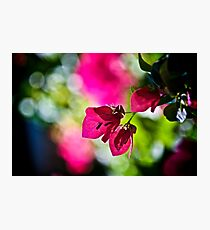 When my dream is Bokeh...:On Featured: The-power-of-simplicity Group Photographic Print