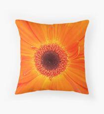 Tangerine Gerbera Throw Pillow