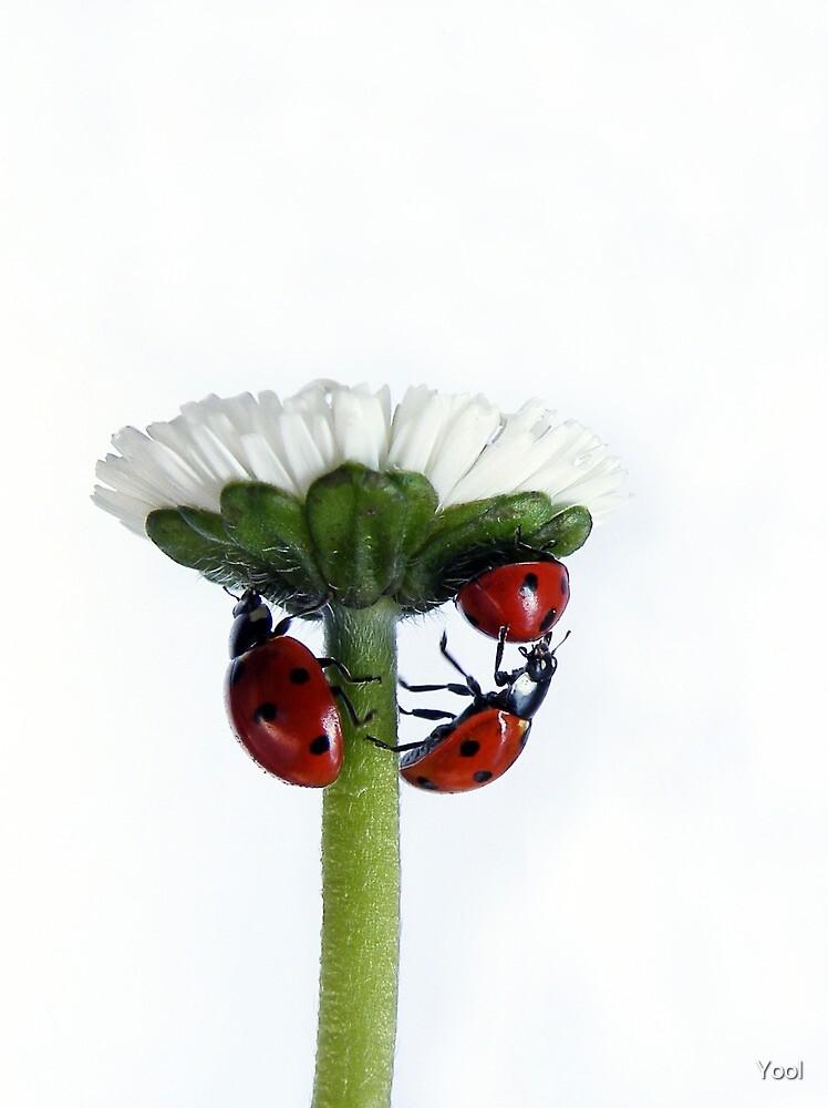 Pushing up daisy... by Yool