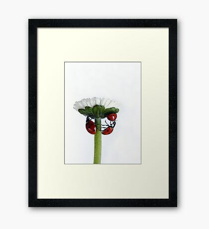 Pushing up daisy... Framed Print