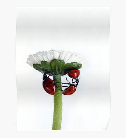 Pushing up daisy... Poster