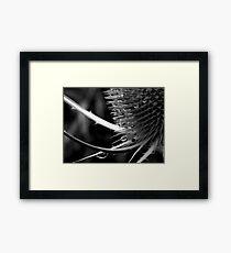 Monochrome Teasel Framed Print