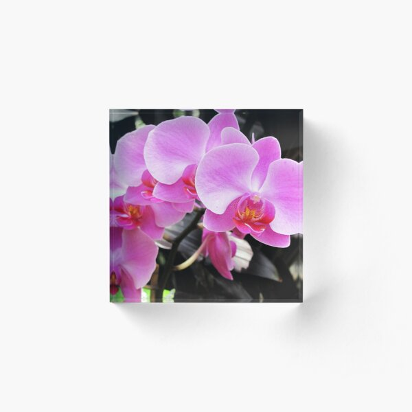 Arch Of Orchids Acrylic Block